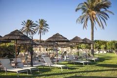 Verse gras, ligstoelen en palmen Een paradijs ter wereld Royalty-vrije Stock Afbeelding