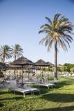 Verse gras, ligstoelen en palmen Een paradijs ter wereld Stock Afbeeldingen