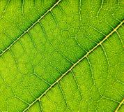 Verse groen Stock Afbeelding