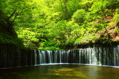 Verse groen en waterval Royalty-vrije Stock Fotografie