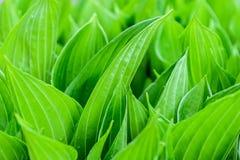 Verse groenachtergrond Stock Fotografie