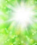 Verse groene abstracte achtergrond Royalty-vrije Stock Fotografie