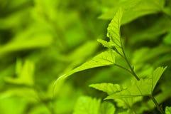 Verse groene achtergrond - de lenteaard Royalty-vrije Stock Afbeeldingen