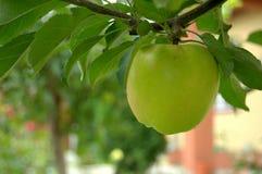 Verse groene appel stock afbeelding