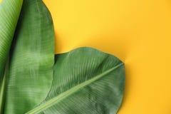 Verse groene banaanbladeren op kleurenachtergrond, ruimte voor tekst Tropisch Gebladerte stock afbeeldingen