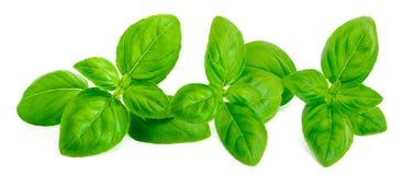 Verse groene basilicumbladeren die op witte achtergrond worden geïsoleerd Grens Fr Royalty-vrije Stock Foto