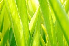Verse groene bladeren Stock Foto