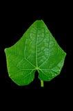 Verse groene bladeren Geïsoleerde op zwarte achtergrond Stock Foto