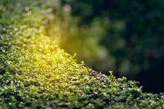 Verse groene bladeren Groene achtergrond met bladeren Stock Afbeeldingen