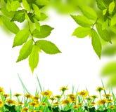 Verse groene bladeren met wilde bloemen Stock Afbeeldingen