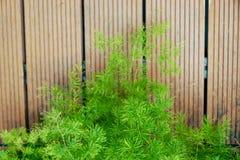 Verse groene bladeren op de houten vloerachtergrond royalty-vrije stock foto