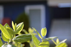 Verse groene bladeren op tak Royalty-vrije Stock Foto