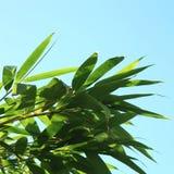 Verse groene bladeren tegen een blauwe hemel Stock Afbeeldingen
