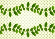 Verse groene bladeren van Siberische peashrub in gegolfte regeling Stock Afbeeldingen