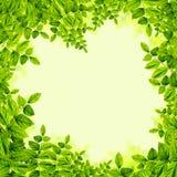 Verse Groene bladerenachtergrond royalty-vrije illustratie