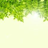 Verse Groene bladerenachtergrond vector illustratie