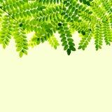 Verse Groene bladerenachtergrond stock illustratie