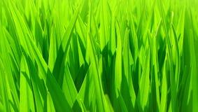 Verse groene bladerenachtergrond Stock Foto's