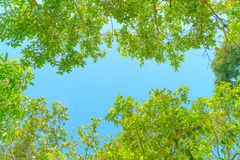 Verse groene boombladeren, kader Natuurlijke achtergrond, Groene bladeren op de achtergrond van de de lenteboom stock afbeeldingen