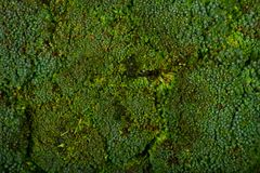 Verse groene broccoli Royalty-vrije Stock Afbeeldingen