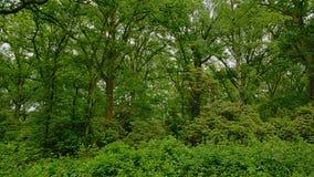 Verse groene de lente boswildernis in Vlaanderen royalty-vrije stock afbeelding