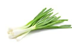Verse groene de lenteuien Royalty-vrije Stock Afbeeldingen
