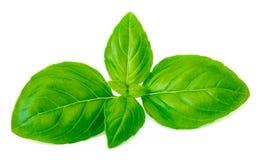 Verse groene die basilicumbladeren op witte achtergrond, dichte omhooggaand worden geïsoleerd Royalty-vrije Stock Afbeeldingen