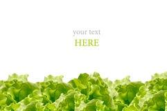 Verse groene die salade op witte achtergrond wordt geïsoleerd Royalty-vrije Stock Afbeeldingen