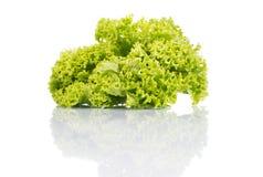 Verse groene die sla op een wit wordt geïsoleerd Stock Afbeelding