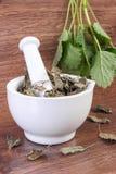 Verse groene en droge citroenbalsem in mortier, herbalism, alternatieve geneeskunde royalty-vrije stock foto