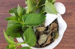 Verse groene en droge citroenbalsem in mortier, herbalism, alternatieve geneeskunde stock afbeelding