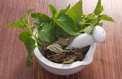 Verse groene en droge citroenbalsem in mortier, herbalism, alternatieve geneeskunde stock foto's