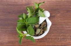 Verse groene en droge citroenbalsem in mortier, herbalism, alternatieve geneeskunde stock afbeeldingen