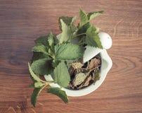 Verse groene en droge citroenbalsem in mortier, herbalism, alternatieve geneeskunde royalty-vrije stock afbeeldingen