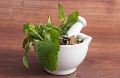 Verse groene en droge citroenbalsem in mortier, herbalism, alternatieve geneeskunde stock fotografie