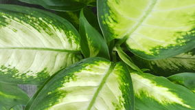 Verse groene en witte bladeren royalty-vrije stock afbeeldingen