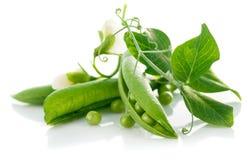 Verse groene erwten met blad en bloem Stock Fotografie