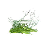 Verse groene geïsoleerde erwtenplons op water, Royalty-vrije Stock Foto's