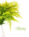 Verse groene gele de lentebloemen Stock Afbeelding