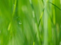 Verse Groene Grasachtergrond Stock Afbeeldingen