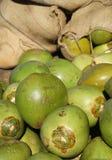 Verse groene kokosnoten Royalty-vrije Stock Afbeeldingen