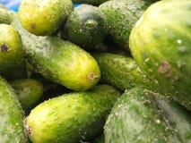 Verse groene komkommerinzameling openlucht op marke Royalty-vrije Stock Fotografie