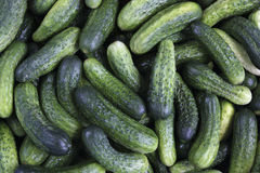Verse groene komkommers Stock Fotografie