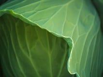 Verse groene kooltuin in de middag stock afbeeldingen