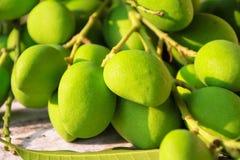 Verse groene mango Stock Afbeeldingen