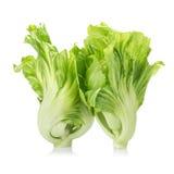 Verse groene mosterd op witte achtergrond Stock Foto's
