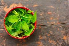 Verse groene netelbladeren in een rode kom Stock Foto