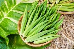 Verse groene okra in mand royalty-vrije stock foto's