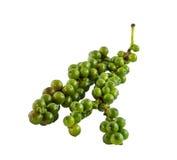 Verse groene paprika op witte achtergrond Stock Afbeeldingen