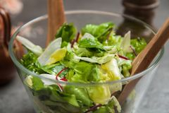 Verse groene salade Royalty-vrije Stock Foto's